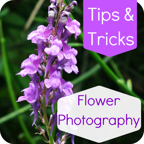 pop2 030hhh Flower Photography Tips and Tricks