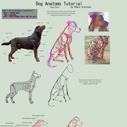 Dog Anatomy Tutorial 1 by SleepingDeadGirl 40 Free Art Tutorials